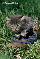 SH32-016z  Cat - kitten playing at 4 weeks old