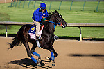 APRIL 27, 2015: Condo Commando, trained by Rudy Rodriguez, exercises in preparation for the 141st Kentucky Oaks at Churchill Downs in Louisville, Kentucky. Jon Durr/ESW/Cal Sport Media