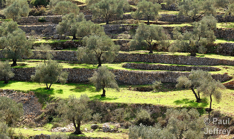 In the West Bank village of Shuqba, Palestinian villagers have long enjoyed terraced, fertile hillsides on which they cultivate olives.