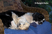 SH25-749z English Springer Spaniel sleeping