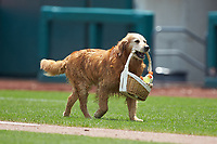 Jake the Diamond Dog brings a basket of drinks to the home plate umpire during the International League game between the Indianapolis Indians and the Columbus Clippers at Huntington Park on June 17, 2018 in Columbus, Ohio. The Indians defeated the Clippers 6-3.  (Brian Westerholt/Four Seam Images)