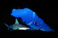 DIVER AND SANDBAR SHARK Carcharhinus plumbeus, Maui, HAWAII.