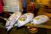 cart and frozen tunas, Tsukiji Market, Tokyo, Japan, Pacific Ocean