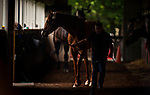 ELMONT, NY - JUNE 06: Triple Crown hopeful Justify walks shed row with assistant trainer Jimmy Barnes at Belmont Park on June 06, 2018 in Elmont, New York. (Photo by Alex Evers/Eclipse Sportswire/Getty Images)