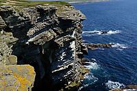 Orkney Islands, Mainland, cliffs at Brough Head<br /> Scotland May 8th - 19th. Trip across Scotland<br /> Foto Samantha Zucchi Insidefoto