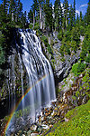 Narada Falls is viewed from a short walk off Paradise Road, just below famous Paradise Meadows and Paradise Lodge and above the Longmire park entrance. .The falls viel is 168' high, 240 feet total height.  Reachable by a longer trail along the Nisqually River from the Longmire Lodge.