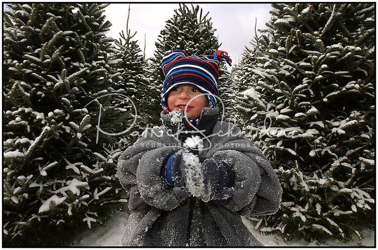 A boy stands among the trees as his family searches for a Christmas tree at the Big Ridge Tree Farm in Banner Elk, N.C. Model released photo, can be used to illustrate Christmas tree searches elsewhere.