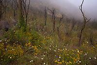 Mishe Mokwa Trail in Fog 1