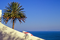 Tunisia, Sidi Bou Said.  Palm Tree and Wall, Bay of Tunis in Background.