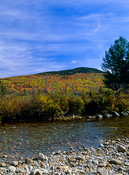 Fall colors along Zealand River in the White Mountains, New Hampshire. This area was once part of the Zealand Valley Railroad, which was a logging railroad in operation from 1886-1897.