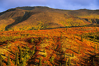 Tundra and taiga landscape in Denali National Park, Alaska
