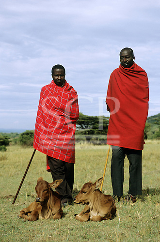 Lolgorian, Kenya. Two Siria Maasai men with two brown calves.