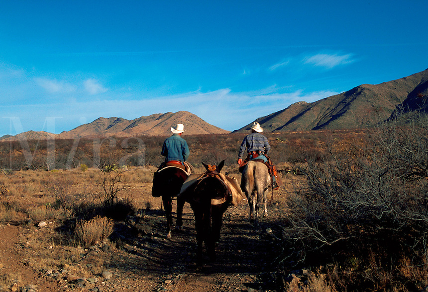 Cowboys on horseback with a pack mule transport salt as a supplement for desert livestock and wildlife in the remote Dos Cabezas Mountains . Arizona.