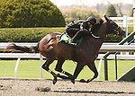 07 April 2011.  Hip #150 Street Sense - Gwinnett filly consigned by Murray Smith as agent works  1/8 in 09.4.