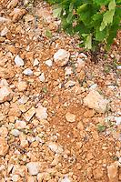 Domaine d'Aupilhac. Montpeyroux. Languedoc. Terroir soil. France. Europe. Vineyard. Soil with stones rocks.