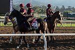 ARCADIA, CA  OCTOBER 31.Breeders' Cup Turf entrant Mount Everest, trained by Aidan P. O'Brien,   exercises in preparation for the Breeders' Cup World Championships at Santa Anita Park in Arcadia, California on October 31, 2019.  (Photo by Casey Phillips/Eclipse Sportswire/CSM)