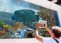 Large fish tank Sony Aquarium 2018 at Ginza Sony Park