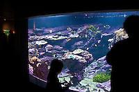 Cherbourg Cité de la Mer  Museo dedicato al mare l'acquario, profili in controluce