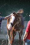 Morning Workouts - Will Take Charge shakes during bath