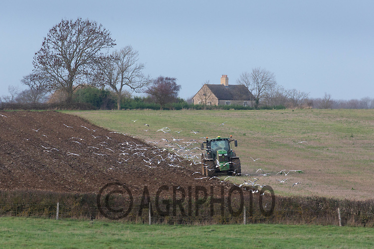 24.11.2020 Ploughing in Lincolnshire<br /> ©Tim Scrivener Photographer 07850 303986<br />      ....Covering Agriculture In The UK....