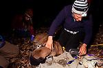 Mountain Lion (Puma concolor) biologist, Chris Wilmers, placing satellite collar on sub-adult male, Santa Cruz Puma Project, Santa Cruz, Monterey Bay, California