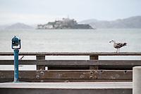 Moewe am Pier in San Francisco. Im Hintergrund die Gefaengnisinsel Alcatraz.<br /> 29.5.2017, San Francisco<br /> Copyright: Christian-Ditsch.de<br /> [Inhaltsveraendernde Manipulation des Fotos nur nach ausdruecklicher Genehmigung des Fotografen. Vereinbarungen ueber Abtretung von Persoenlichkeitsrechten/Model Release der abgebildeten Person/Personen liegen nicht vor. NO MODEL RELEASE! Nur fuer Redaktionelle Zwecke. Don't publish without copyright Christian-Ditsch.de, Veroeffentlichung nur mit Fotografennennung, sowie gegen Honorar, MwSt. und Beleg. Konto: I N G - D i B a, IBAN DE58500105175400192269, BIC INGDDEFFXXX, Kontakt: post@christian-ditsch.de<br /> Bei der Bearbeitung der Dateiinformationen darf die Urheberkennzeichnung in den EXIF- und  IPTC-Daten nicht entfernt werden, diese sind in digitalen Medien nach §95c UrhG rechtlich geschuetzt. Der Urhebervermerk wird gemaess §13 UrhG verlangt.]