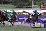 November 2, 2019: Mo Forza, ridden by Joel Rosario, wins the Qatar Twilight Derby (Grade II) on Breeders' Cup World Championship Saturday at Santa Anita Park on November 2, 2019: in                                                                                                                                                                                                                                                                                                                                                                                                                                                                                                                                                                                                                                                                                                                                          Arcadia, California. Bill Denver/Eclipse Sportswire/CSM