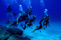 Scuba divers enjoy exploring Hawaii's unique coral reef community.This photo taken at Pupukea, also know as Shark's Cove. Located on Oahu's north shore.