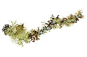 Twig covered in lichens, photographed on a white background. Glen Affric, Caledonian Forest Reserve, Highlands, Scotland, UK.
