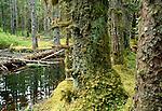 Temperate rainforest bog, Bartlett Cove, Glacier Bay National Park and Preserve, Alaska, USA