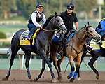 ARCADIA, CA - OCT 31: Arrogate, owned by Juddmonte Farms, Inc. and trained by Bob Baffert, exercises in preparation for the Breeders' Cup Classic at Santa Anita Park on October 31, 2016 in Arcadia, California. (Photo by Zoe Metz/Eclipse Sportswire/Breeders Cup)