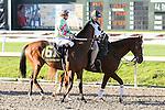 NEW ORLEANS, LA - FEBRUARY 25: Enterprising #6, ridden by Julien R. Leparoux, Fair Grounds Handicap race on Risen Star Stakes Day at Fair Grounds Race Course on February 25, 2017 in New Orleans, Louisiana. (Photo by Jarrod Monaret/Eclipse Sportswire/Getty Images)