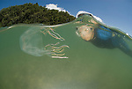 Snorkler with box jellyfish, Chiropsalmus sp.
