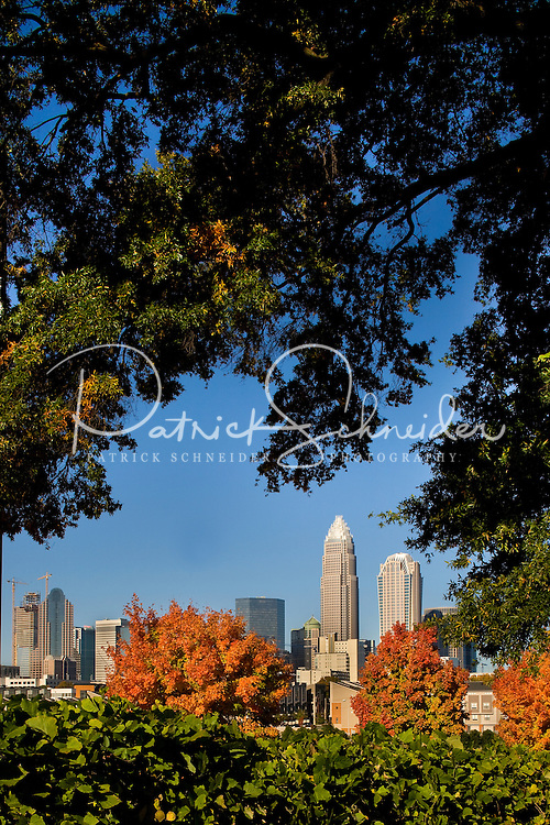 The uptown Charlotte skyline is framed between the changing leaves in Charlotte, N.C.