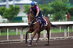 SHA TIN,HONG KONG-APRIL 30: Buffering ,trained by Robert Heathcote,exercises in preparation for the Chairman's Sprint Prize at Sha Tin Racecourse on April 30,2016 in Sha Tin,New Territories,Hong Kong (Photo by Kaz Ishida/Eclipse Sportswire/Getty Images)
