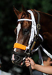 09 July 30: Nacho Friend prior to the 95th running of the grade 2 Sanford Stakes for two year olds at Saratoga Race Track in Saratoga Springs, New York.