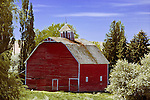 Old barn along the Almota Road from the Pullman and Colfax area to Almota on the Snake River in the famous Palouse Country of Washington State.  Barn and farmyard.
