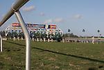 Turf Racing at Gulfstream, scenes from Gulfstream Park, Hallandale Beach Florida. 01-11-2014