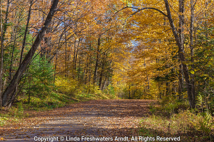 A forest road on a pretty autumn day in northern Wisconsin.