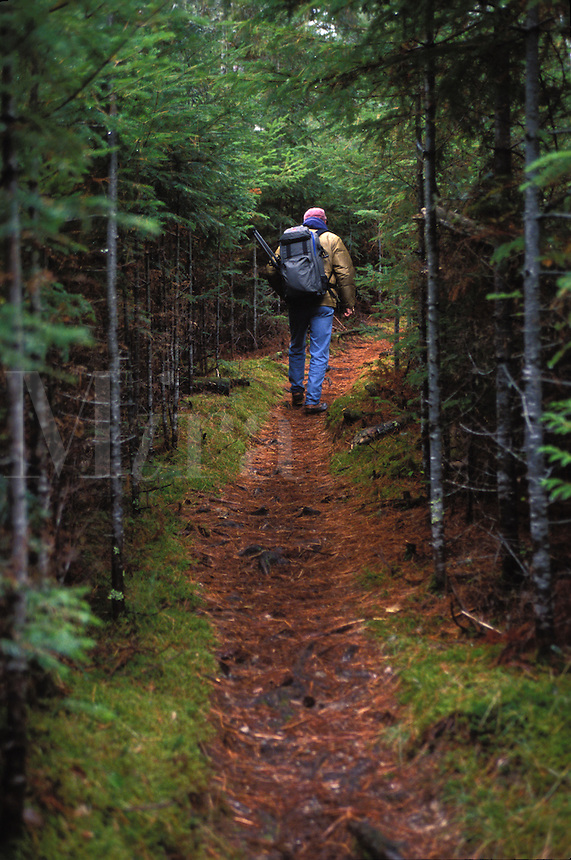 Hiker heading up the trail amongst the fir trees in Baxter State Park, Maine.