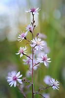 Phoenix Perennials - October