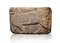 Phrygian relief sculpted orthostat stone panel Andesite, Atateirk Orman ciftligi, Ankara, 12OO-700 B.C. Anatolian Civilisations Museum, Ankara, Turkey.<br /> <br /> Winged griffin with a bird's head and a lion's body. There is a bird's head at the end of its tail. The chest was processed like fish scales. Its wing extends along the body. Muscles in its legs are schematic. <br /> <br /> Against a white background.