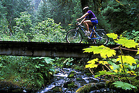 Mountain Biking on Resurrection River Trail.  Chugach National Forest, Kenai Peninsula, Alaska.  MR