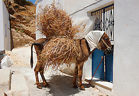 Donkey loaded with hay sleeping in the mid day sun. Naxos, Greek Cyclades Islands