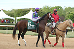 HOT SPRINGS, AR - APRIL 14: Magnum Moon #6, with jockey Luis Saez aboard before running of the Arkansas Derby at Oaklawn Park on April 14, 2018 in Hot Springs, Arkansas. (Photo by Justin Manning/Eclipse Sportswire/Getty Images)