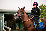 October 20, 2018 : Breeders' Cup Classic contender Collected with Humberto Gomez comes off the track after working out at Santa Anita Park on October 20, 2018 in Arcadia, California. Evers/ESW/CSM