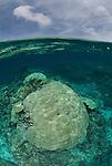 Porites coral heads in shallow reef, Split level. Porites sp.