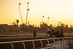 ARCADIA, CA  OCTOBER 25: Breeders' Cup Dirt Mile entrant Improbable, trained by Bob Baffert, exercises in preparation for the Breeders' Cup World Championships at Santa Anita Park in Arcadia, California on October 25, 2019. .(Photo by Casey Phillips/Eclipse Sportswire/CSM)