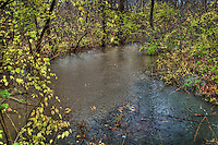 Rainwater runoff from street drainage blends into the darker water in a creek running from a wetlands pond in a Westerville, Ohio, city park. The drainage runoff is usually empty and only fills during heavy rainstorms pulling silt and top soil from yards and businesses that joins the brackish water from the wetlands pond.