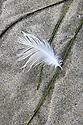 Grass Feather Sand